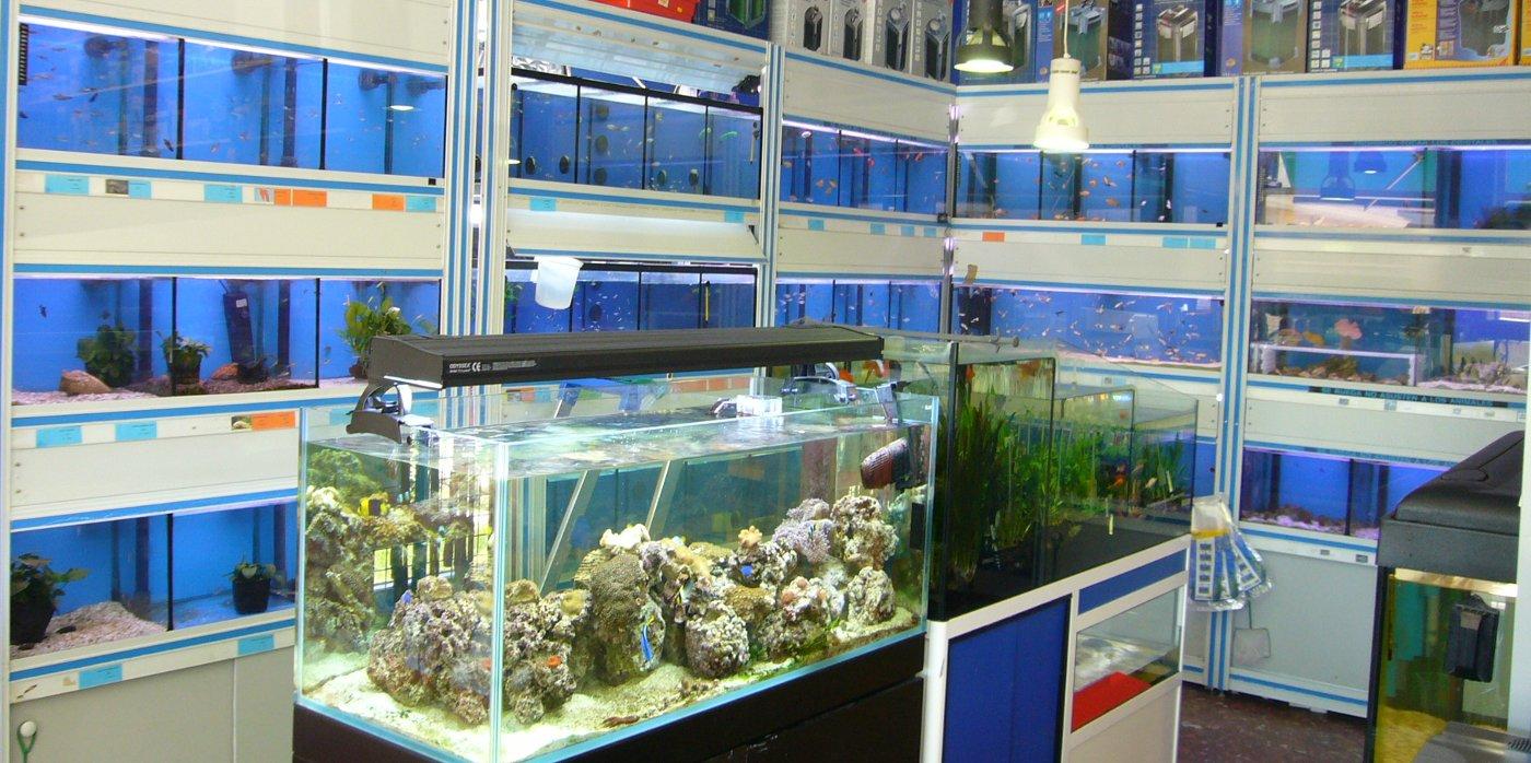 peces, aquarios y terrarios en aquamail