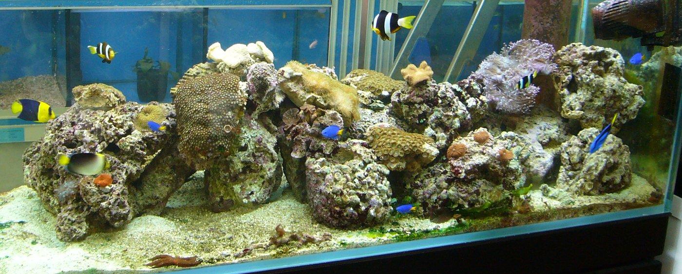acuarios y terrario online en aquamail