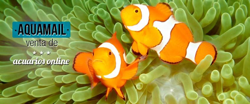 acuarios y peces  online en aquamail